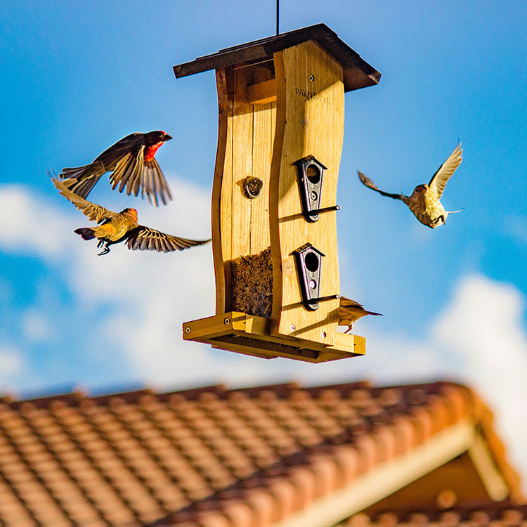 Vogelhaus Test